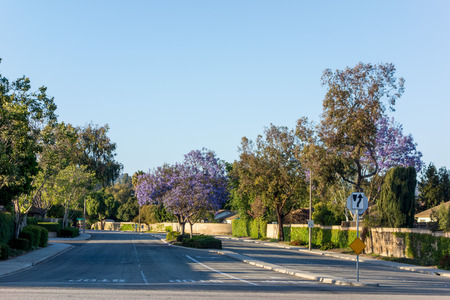 residential houses: Drivei way to residential houses along Adolfo Street decorated with Purple Blue Jacaranda, Camarillo, Ventura county, CA