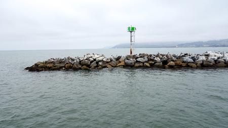 California Brown Pelicans all over breakwater near Ventura harbor in port of San Buenaventura, Southern California Stock Photo