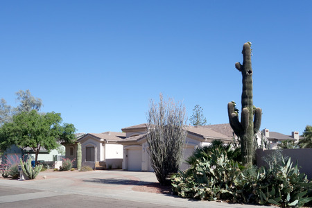 Arizona desert style front yard xeriscaping with saguaro and other succulents Zdjęcie Seryjne - 103362477