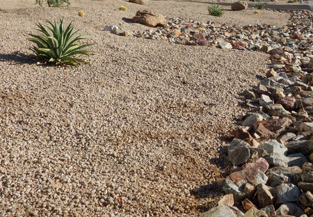 Xeriscaping with native desert drought tolerant succulents and cacti  in the streets of capital Arizona city of Phoenix Zdjęcie Seryjne - 102978246
