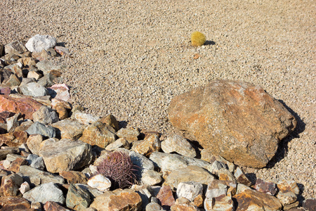 Desert landscaping with native drought tolerant cacti and natural boulder and rocks in Phoenix, Arizona Zdjęcie Seryjne - 103525818