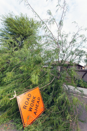 Residential street with a fallen old mesquite tree after annual summer monsoon storm in Phoenix, Arizona Zdjęcie Seryjne - 108066040