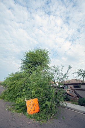 Residential street with a fallen old mesquite tree after annual summer monsoon storm in Phoenix, Arizona Zdjęcie Seryjne - 108066042