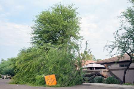 Residential street with a fallen mesquite tree after annual summer monsoon storm in Phoenix, Arizona