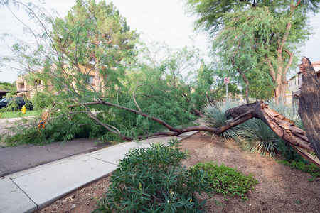 Residential street with a fallen old mesquite tree after annual summer monsoon storm in Phoenix, Arizona Zdjęcie Seryjne - 106166108