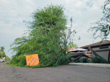 Residential street with a fallen old mesquite tree after annual summer monsoon storm in Phoenix, Arizona
