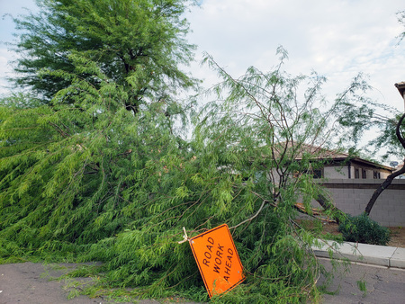 Residential street with a fallen old mesquite tree after annual summer monsoon storm in Phoenix, Arizona Zdjęcie Seryjne - 106432727