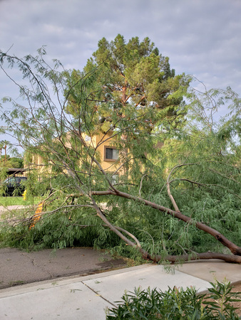 Residential street with a fallen old mesquite tree after annual summer monsoon storm in Phoenix, Arizona Zdjęcie Seryjne - 107291397