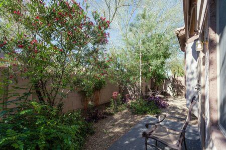 Blooming desert plants with striking colorful flowers in xeriscaped backyard, Phoenix, AZ Zdjęcie Seryjne