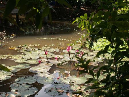 mekong: Mekong Delta Vietnam