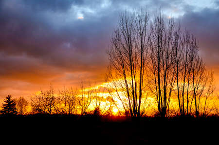 Barren trees at the autumn evening with yellow and orange sunset on a cloudy sky