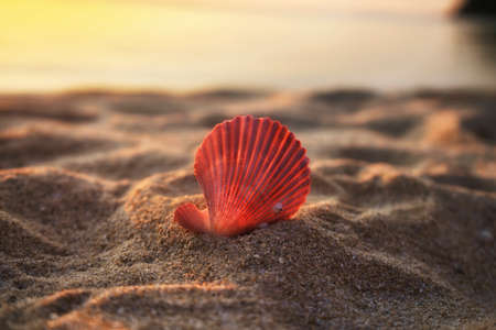Beautiful pink sea shell with sand on sea background