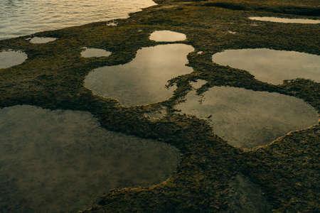 Beautiful green moss on stones near the sea