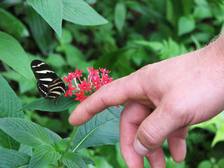 Butterfly on hand in the garden