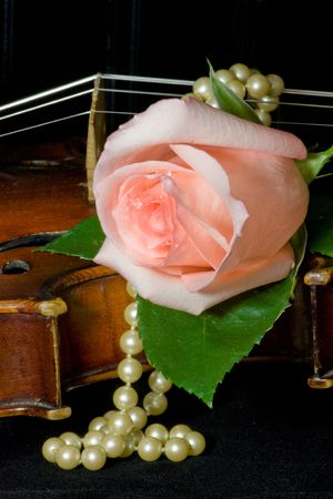 Pale peachy pink rose, pearls and old violin photo