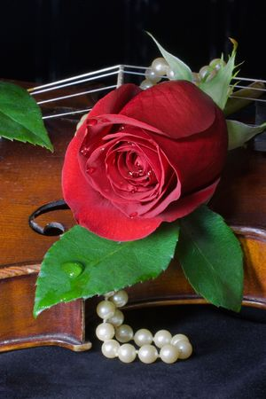 Beautiful red rose and string of pearls lay across old violin on black background.