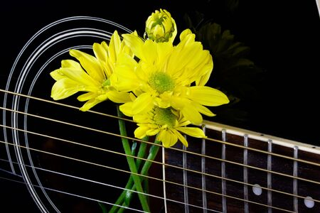 ugly duckling: Yellow daisies in the strings of a black guitar