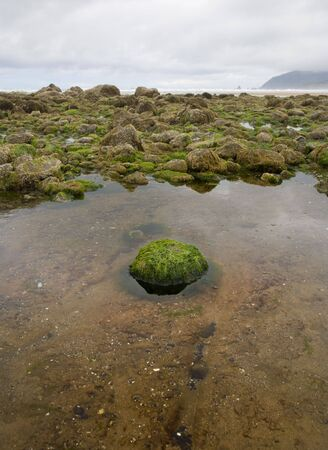 beachcombing: Tidepool on the ocean shore with a single green rock in its center, land mass on the distant horizon and stormy clouds above. Stock Photo