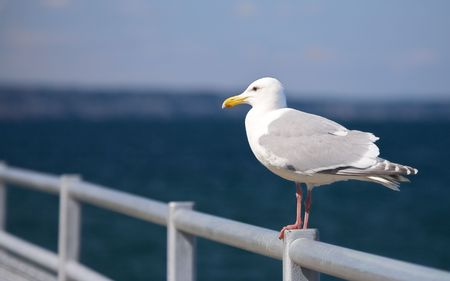 Seagull perched on metal railing by the sea Stock Photo