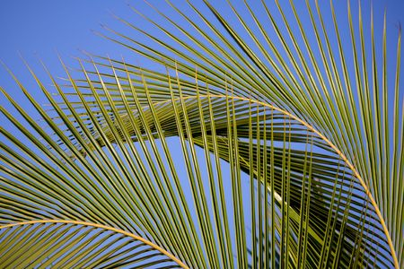 Two large palm fronds bending in the wind create exotic background