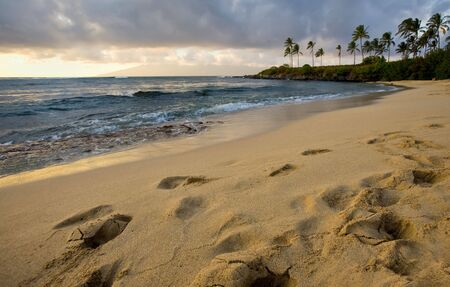 Golden sandy beach at sundown, tropical palm trees in the distance Stock Photo