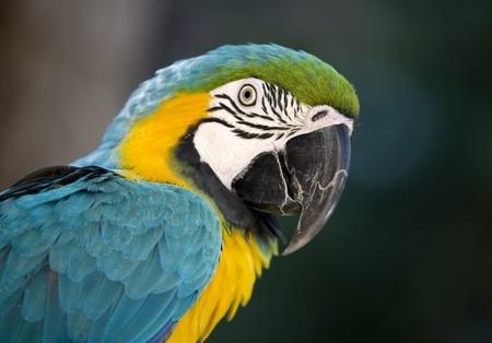 Talking Bird Stock Photo