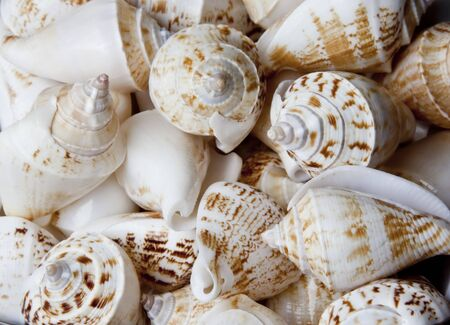 Closeup of lots of sea shells together Stock Photo