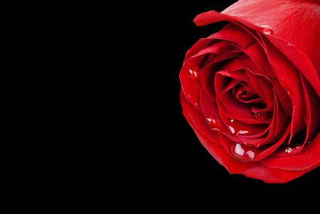 Red rose bulging with water droplets isolated on black background (with path) Stock Photo