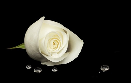 Delicate white rose resting on black velvet surface, water droplets in foreground