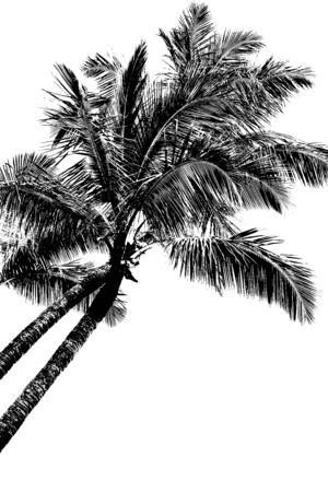 frond: Two palm trees leaning into the wind, high contrast silhouette on white background, gives the appearance of an etching