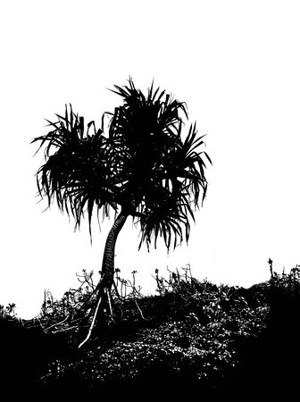 A Hala tree in silhouette, growing on a hill, in black and white
