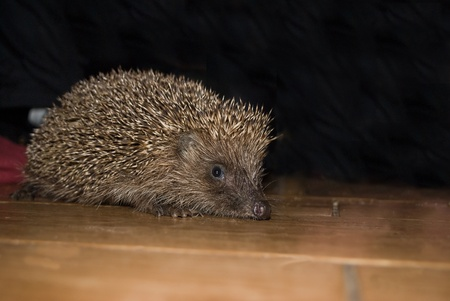 hedgehog Фото со стока - 23106320