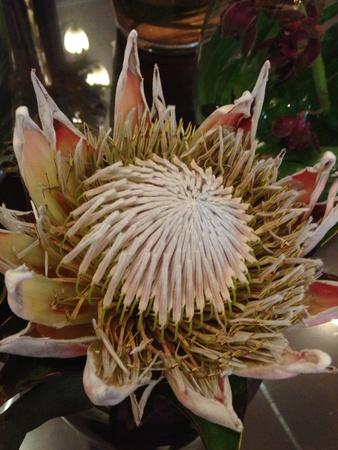 リスボンのホテルで奇妙な花。 写真素材