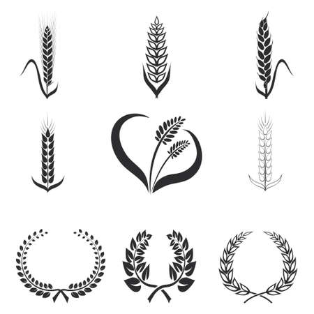 wheat bread: Icons of wheat, rye, corn, graphic design elements on a white isolate background