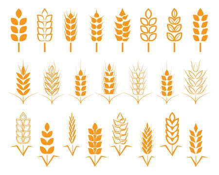 A set of seeds of wheat, barley, rye ears. . Illustration