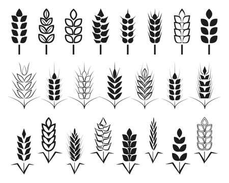 stalks: Symbols. for logo design Wheat. Agriculture, corn, barley, stalks, organic plants, bread, food, natural harvest, vector illustration on white background isolated.