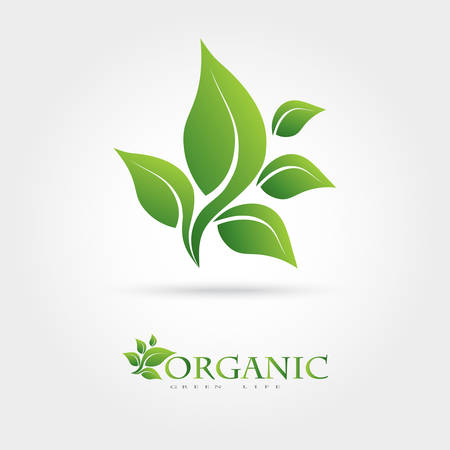 Green vector icon from green leaves. It can be used for eco, vegan, herbal, health care, or the nature of logo design concepts. Illustration