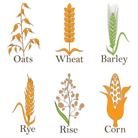 Granen vector iconen. rijst, tarwe, maïs, haver rogge en gerst Vector illustratie