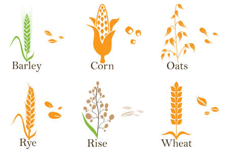 Cereals vector icons. rice, wheat, corn, oats rye and barley Vector illustration Çizim