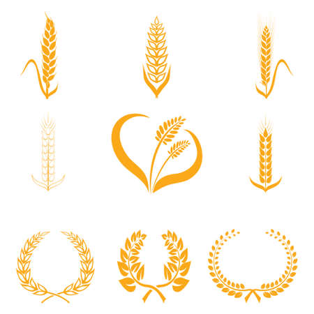 rye: Ears of wheat or rice icons. Agricultural spikelets of wheat symbols on a white background. Organic farming farm crop seeds bread packaging or label beer. Illustration