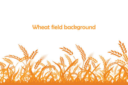 Vector silhouette of wheat. Wheat in the field Illustration