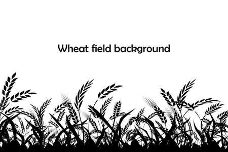 Vector silhouette of wheat. Silhouette. Wheat in the field.  イラスト・ベクター素材