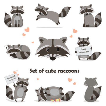 Collection isolated funny raccoon. Emotion little raccoon. Vector set cute raccoon. Cartoon raccoon in children style. Stock Illustratie