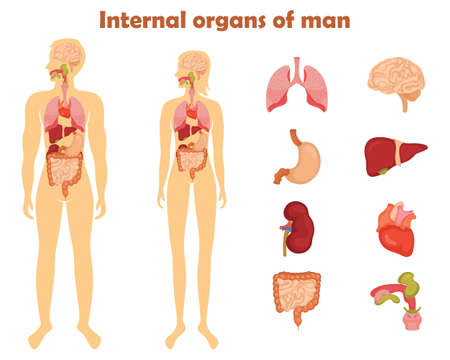 Human Internal Organs Icon Set. Vector Illustration In Cartoon ...