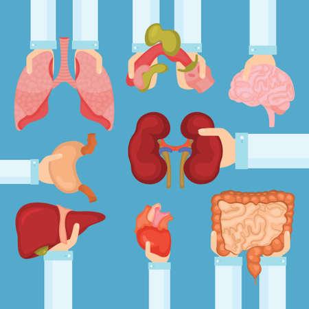 Menselijk orgaan voor transplantatieconcept met handen, medische banner