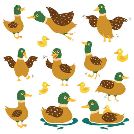A set of flying wild ducks. Lovely funny duck with ducklings. Duck hunting. The sea duck is flying. Vector illustration.