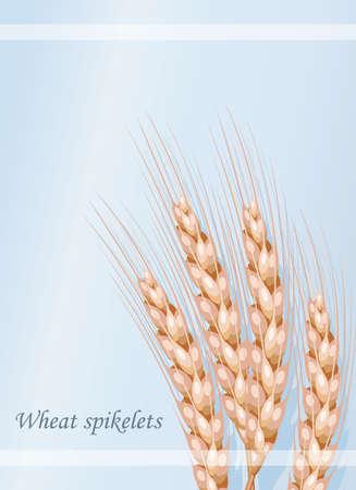 Vector wheat on a blue background  vector illustration. Illustration