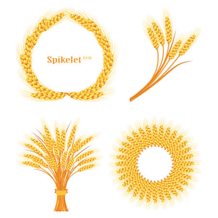 Vector wheat on white isolated background. Vector illustration.