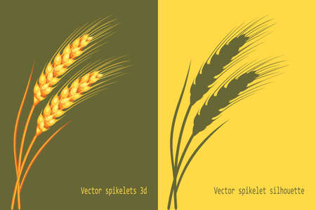 Wheat in 3d and silhouette on green and yellow background isolated vector illustration.