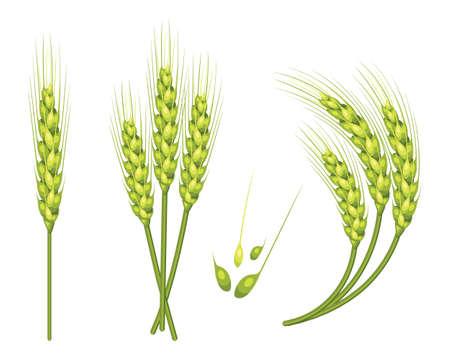 L'insieme del grano di vettore nel 3d ha isolato il fondo bianco con l'illustrazione di vettore dell'aggiunta del seme.